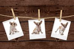 Abbildungen, die an einem Seil eines entzückenden Welpen hängen Lizenzfreie Stockfotos