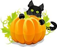 Abóbora de Dia das Bruxas e gato preto Foto de Stock Royalty Free