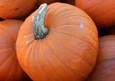 Abóbora de Sugar Pie, pepo do Cucurbita Imagem de Stock Royalty Free
