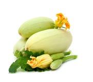 Abóbora fresca com flor e folha Fotos de Stock