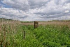 Abbotsbury rural Fotografía de archivo libre de regalías