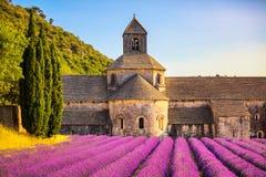 Abbotskloster av Senanque blommande lavendel blommar på solnedgång Gordes L Royaltyfri Foto