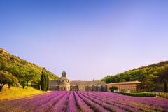Abbotskloster av Senanque blommande lavendel blommar på solnedgång Gordes L Royaltyfria Bilder