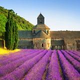 Abbotskloster av Senanque blommande lavendel blommar på solnedgång Gordes L Royaltyfri Bild