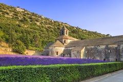 Abbotskloster av Senanque blommande lavendel blommar på solnedgång Gordes L Arkivbild