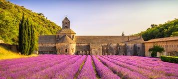 Abbotskloster av Senanque blommande lavendel blommar panorama på solnedgången Fotografering för Bildbyråer