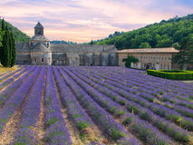 Abbotskloster av Senanque med lavendelfältet Royaltyfri Foto