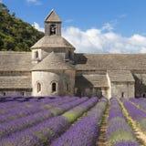 Abbotskloster av Senanque och lavanderfältet Fotografering för Bildbyråer