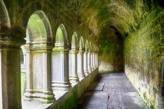 Abbotskloster fördärvar, Quin, Irland Arkivfoto