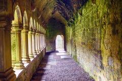 Abbotskloster fördärvar, Quin, Irland Arkivbilder
