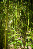 Abbottbury热带庭院多西特英国 库存图片