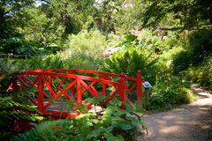 Abbottbury Tropikalni ogródy Dorset UK Fotografia Stock