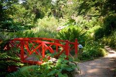 Abbottbury tropiska trädgårdar Dorset UK Arkivbild
