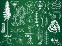 Abbozzi della pianta di biologia sulla scheda di banco illustrazione di stock