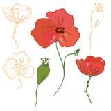 Abbozzo del fiore del papavero royalty illustrazione gratis