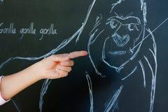 Abbozzo della gorilla sulla lavagna Fotografia Stock Libera da Diritti