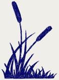 Abbozzo della palude illustrazione di stock
