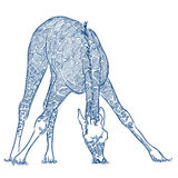 Abbozzo della penna di vettore di una giraffa illustrazione di stock