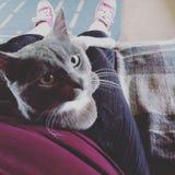 Abbracci del gatto immagine stock