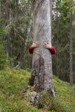 Abbracciare dell'albero fotografia stock libera da diritti