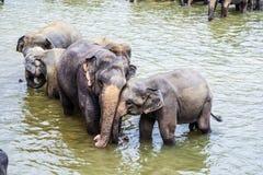 Abbracciare gli elefanti nel fiume Immagini Stock