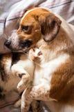 Abbraccio del gatto e del cane sul letto Fotografie Stock