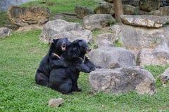 Abbraccio di orso Fotografia Stock Libera da Diritti