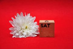 The abbreviation for saturday on a wooden block with a white daisy. On a red background royalty free stock photos