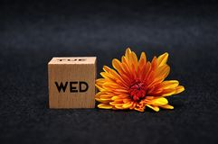The abbreviation for Wednesday on a wooden block with an orange daisy. On a black background royalty free stock image