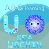 ABC animal letter U is for Urchin Cute sea urchin vector Smiling spiky animal cartoon character Ocean animal, funny sea life creat Royalty Free Stock Image