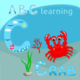 ABC background Sea animal alphabet C letter ABC kids Cute red crab with coral branch and seaweeds vector illustration Tropical sea. Illustration of Cute red crab Royalty Free Stock Image
