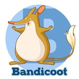 ABC Cartoon Bandicoot. Vector image of the ABC Cartoon Bandicoot Royalty Free Stock Images
