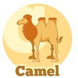 ABC Cartoon Camel. Vector image of the ABC Cartoon Camel Royalty Free Stock Photo