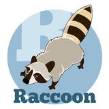 ABC Cartoon Raccoon. Vector image of the ABC Cartoon Raccoon Stock Photography
