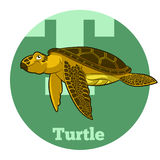 ABC Cartoon Turtle. Vector image of the ABC Cartoon Turtle Stock Images
