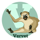 ABC Cartoon Vervet. Vector image of the ABC Cartoon Vervet vector illustration