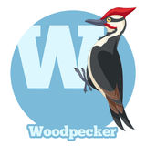 ABC Cartoon Woodpecker. Vector image of the ABC Cartoon Woodpecker vector illustration