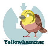 ABC Cartoon Yellowhammer. Vector image of the ABC Cartoon Yellowhammer Royalty Free Stock Photo