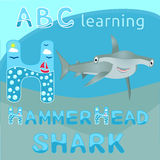 ABC learning H letter Sea animal alphabet Smiling hammerhead shark Big bizarre fish cartoon character Cartoon big grey shark Great Royalty Free Stock Photos