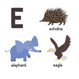 ABC letter E funny kid icons set: eagle, echidna, elephant. Royalty Free Stock Images