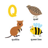 ABC letter Q funny kid icons set: quokka, quail, queen bee Stock Photo