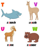 Abc6. Spanish alphabet with different animals: shark, urial, vicuna and wombat Stock Images