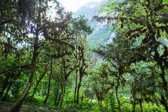 Abchazien skog i klyftan Arkivbilder