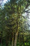 Abchazien skog i klyftan Arkivbild
