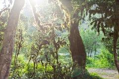 Abchazien skog i klyftan Royaltyfri Foto