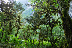 Abchazien skog i klyftan Royaltyfri Fotografi