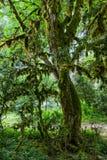 Abchazien skog i klyftan Royaltyfria Foton