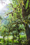 Abchazien skog i klyftan Arkivfoton