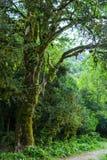 Abchazien skog i klyftan Royaltyfria Bilder