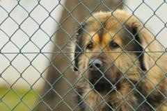 Abdeckunghund Lizenzfreie Stockfotos